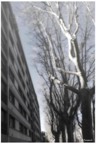 Immeuble-Lascrosses-1306 (1)