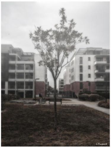 Immeuble-Montaudran-8083